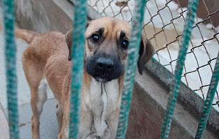 Huendin-07-2-Jahre-februar-2019 26 polnische Hunde sollen gerettet werden - Teil II