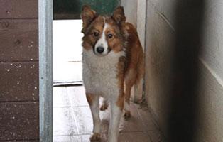 Huendin-08-1-Jahre-februar-2019 26 polnische Hunde sollen gerettet werden - Teil II