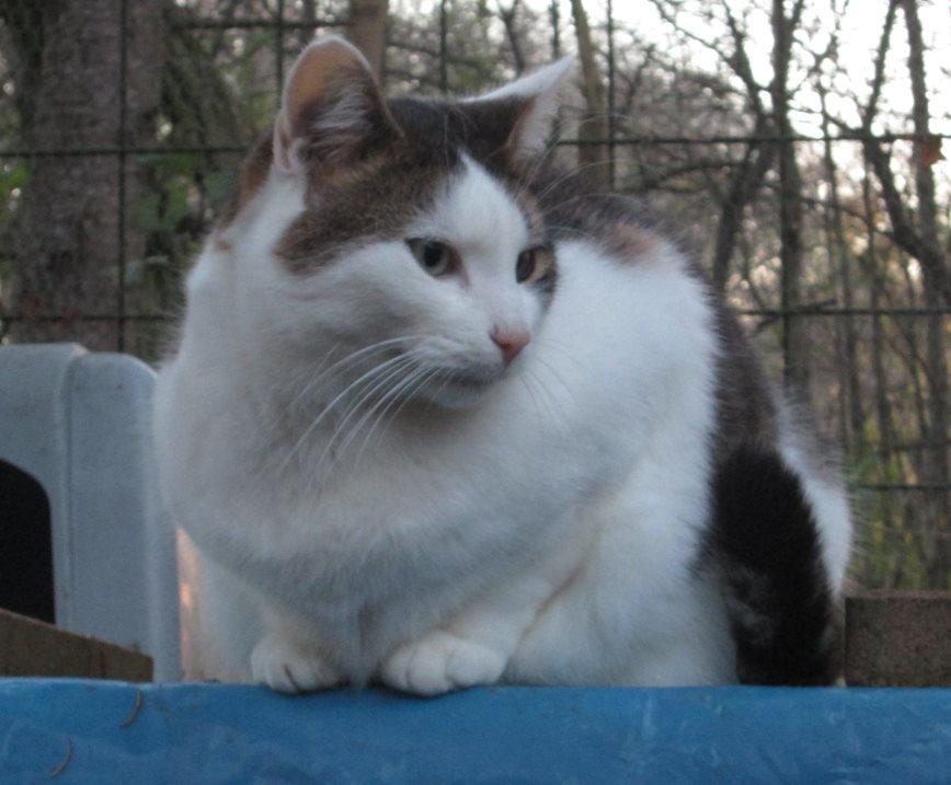 Nady-hat-alles-genau-im-Blick Was ist eine Tier-Patenschaft