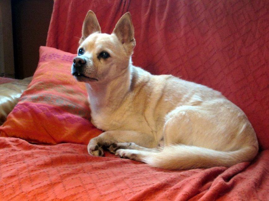 Purzel-liegt-gerne-auf-der-Couch Purzel (OH005/18)