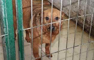 Ruede-01-5-Jahre-februar-2019 26 polnische Hunde sollen gerettet werden - Teil I