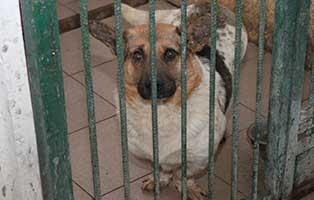 Ruede-03-2-Jahre-februar-2019 26 polnische Hunde sollen gerettet werden - Teil I