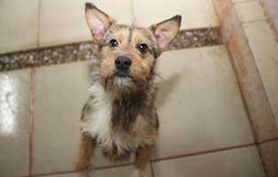 Ruede-05-1-Jahr-februar-2019 26 polnische Hunde sollen gerettet werden - Teil I