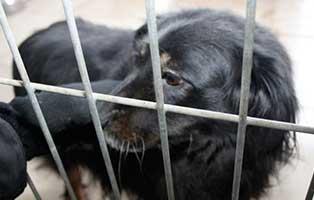Ruede-06-7-Jahre-februar-2019 26 polnische Hunde sollen gerettet werden - Teil I
