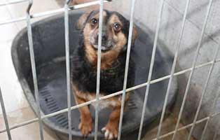 Ruede-07-7-Jahre-februar-2019 26 polnische Hunde sollen gerettet werden - Teil I