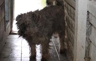 Ruede-08-5-Jahre-februar-2019 26 polnische Hunde sollen gerettet werden - Teil II
