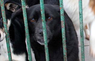 Ruede-09-2-Jahre-februar-2019 26 polnische Hunde sollen gerettet werden - Teil II