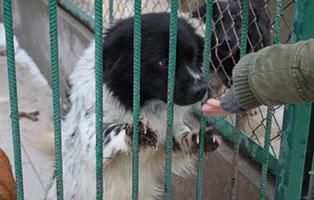 Ruede-10-2-Jahre-februar-2019 26 polnische Hunde sollen gerettet werden - Teil II