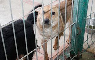 Ruede-12-2-Jahre-februar-2019 26 polnische Hunde sollen gerettet werden - Teil II