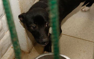 Ruede-13-2-Jahre-februar-2019 26 polnische Hunde sollen gerettet werden - Teil II
