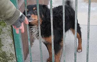 Ruede-14-6-Jahre-februar-2019 26 polnische Hunde sollen gerettet werden - Teil II