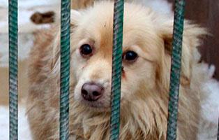 Ruede-15-4-Jahre-februar-2019 26 polnische Hunde sollen gerettet werden - Teil II