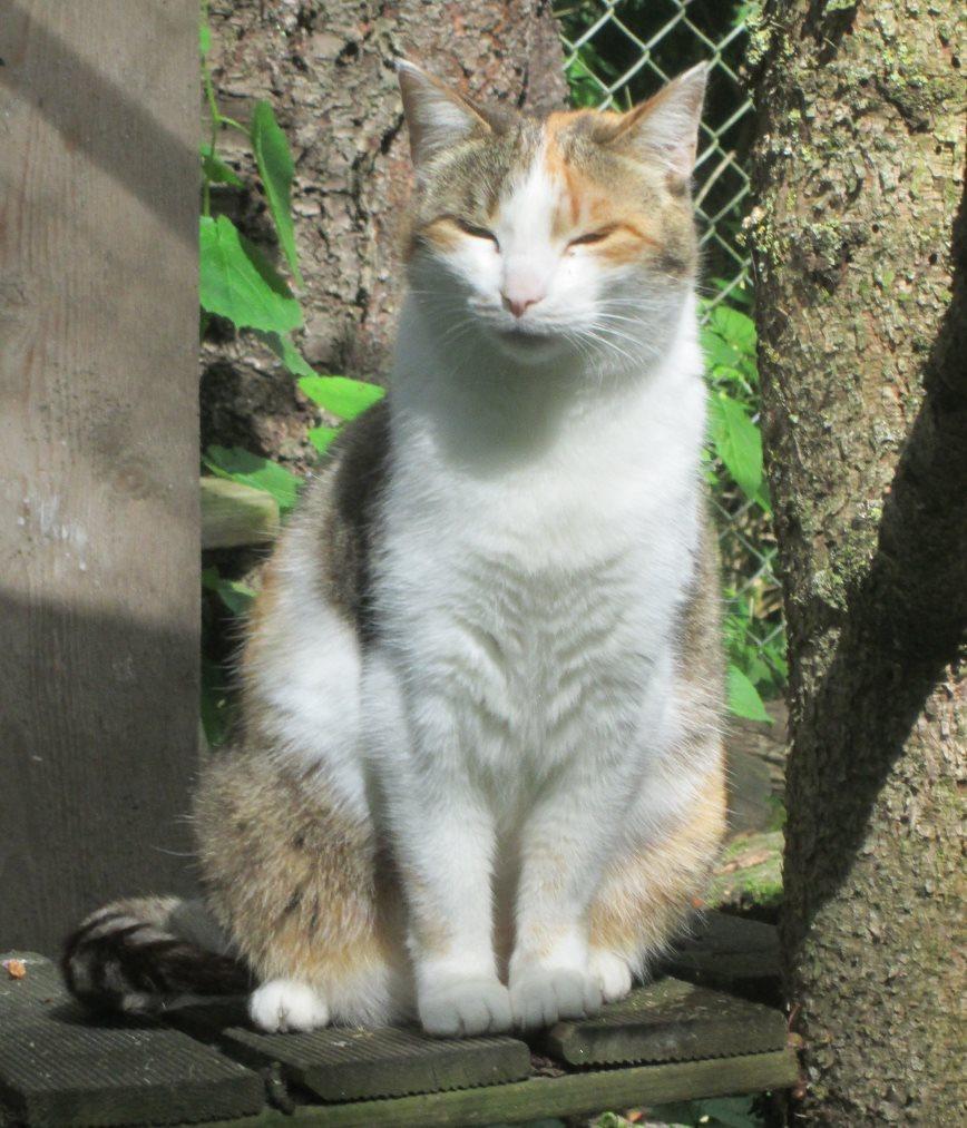 Sally-genießt-die-Sonne Was ist eine Tier-Patenschaft