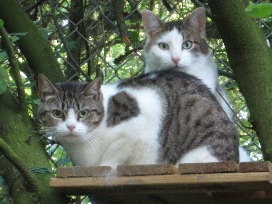 Zada-und-ihre-Freundin-Nady Was ist eine Tier-Patenschaft