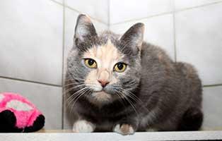 gluecklich-vermittelt-melli Wunderschöne Kätzin Melli