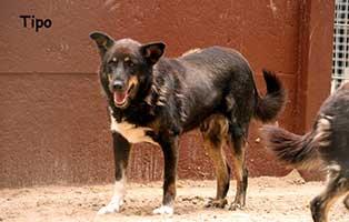 hund-tipo-verstorben-gaehnt Tipo – endlich frei