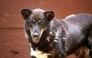 hund-tipo-verstorben-schaut Leobär - Ruhe in Frieden