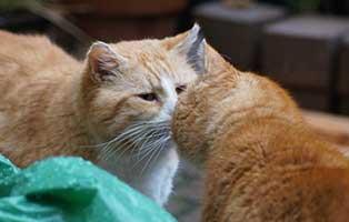 kater-gandalf-gluecklich-vermittelt-nasenkuesschen Hannes & Harry - Glückliche Katzenbande