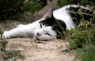 kater-pinki-verstorben-relaxen Leobär - Ruhe in Frieden