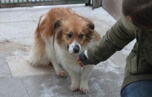 Huendin-02-3-Jahre-Maerz-2019 6 Hunde aus Polnischem Tierheim suchen Aufnahmepaten