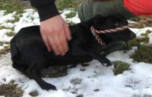 Huendin-03-2-Jahre-Maerz-2019 6 Hunde aus Polnischem Tierheim suchen Aufnahmepaten