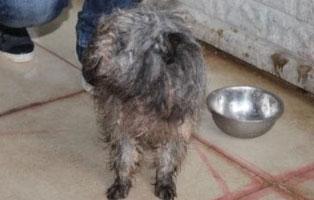 Ruede-01-Maerz-2019 6 Hunde aus Polnischem Tierheim suchen Aufnahmepaten