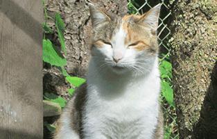 Sally-genießt-die-Sonne Tierparadies Oberdinger Moos