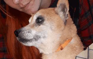 huendin-aila-zurueck-gelassen Max - gekämpft, gehofft und doch verloren