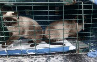katzen-kaefig-spanien-karin-mueller Katzen in Spanien - Ein Bericht von Karin Müller