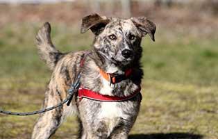 polenhund-montana-zuhause-gesucht-achtung Alwin und Montana suchen ein neues Zuhause