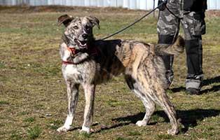 polenhund-montana-zuhause-gesucht-leine Alwin und Montana suchen ein neues Zuhause