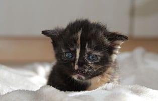 Katzenbaby-01-weiblich-04-2019 4 Katzenbabys suchen Start-ins-Leben Paten
