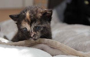 Katzenbaby-02-weiblich-04-2019 4 Katzenbabys suchen Start-ins-Leben Paten