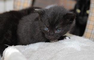 Katzenbaby-03-maennlich-04-2019 4 Katzenbabys suchen Start-ins-Leben Paten