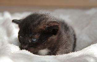 Katzenbaby-04-maennlich-04-2019 4 Katzenbabys suchen Start-ins-Leben Paten