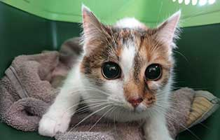 beschlagnahmung-46-katzen-wollaberg-katze-18-5-jahre Katzenstation Netzschkau – Marode Hütten machen das Katzenleben schwer