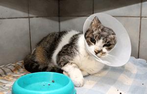 fundkatze-ohr-abgerissen-trudi-napf-300x191 Katze mit abgerissenem Ohr braucht Ihre Hilfe