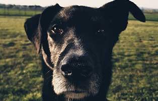hund-sam-gluecklich-vermittelt-portrait Elliot - alter Tierschutzhund möchte sich verabschieden und bedanken