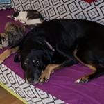hund-soka-couch-katzen-150x150 Soka hat es gut getroffen