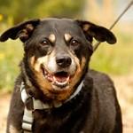 hund-taylor-verstorben-gassi-150x150 Taylor – tapferer kleiner Freund