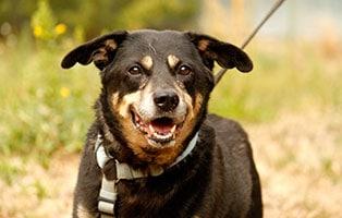 hund-taylor-verstorben-gassi Tipo – endlich frei