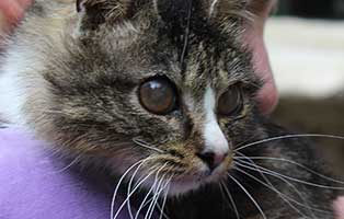 kater-schmuser-blind-augenoperation-arm Glücklich vermittelt - Katzenstation München