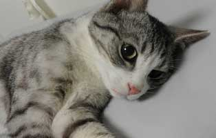 katze-bein-gebrochen-hilfe Hilfe für unsere Katzenschnupfen-Kinder