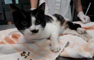 katze-fehlgeburt-operation-futter Katzenstation Netzschkau – Marode Hütten machen das Katzenleben schwer