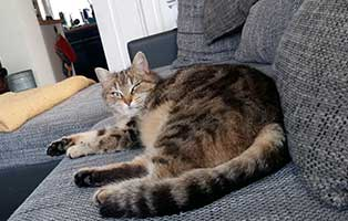 katze-ramba-gluecklich-vermittelt-couch In Wardenburg hat der alte Boxenstall ausgedient