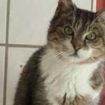katzenauslauf-netzschkau-bianca-150x150 Bitte lasst uns nach draussen - Katzengehege für ansteckende Katzen
