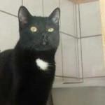 katzenauslauf-netzschkau-franzi-150x150 Bitte lasst uns nach draussen - Katzengehege für ansteckende Katzen