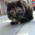 katzenauslauf-netzschkau-liz-150x150 Bitte lasst uns nach draussen - Katzengehege für ansteckende Katzen