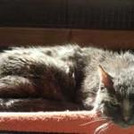 katzenauslauf-netzschkau-molly-150x150 Bitte lasst uns nach draussen - Katzengehege für ansteckende Katzen