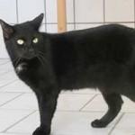 katzenauslauf-netzschkau-moses-150x150 Bitte lasst uns nach draussen - Katzengehege für ansteckende Katzen